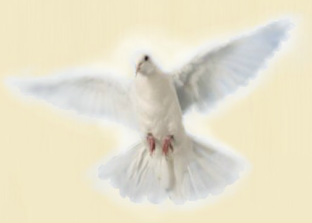 A white dove - The Holy Spirit